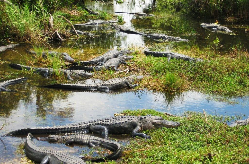 Everglades National Park.
