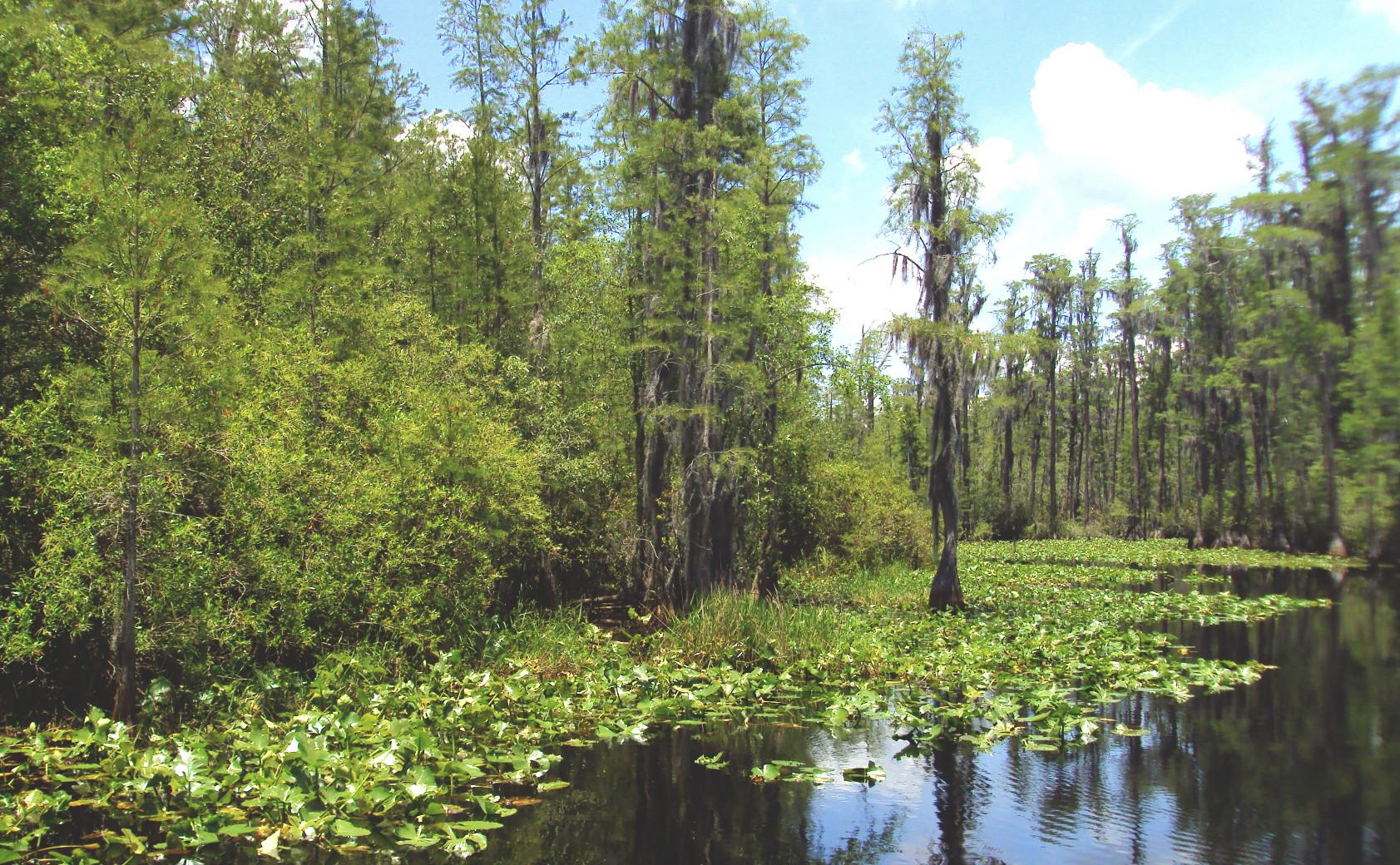 Okefenokee Swamp.